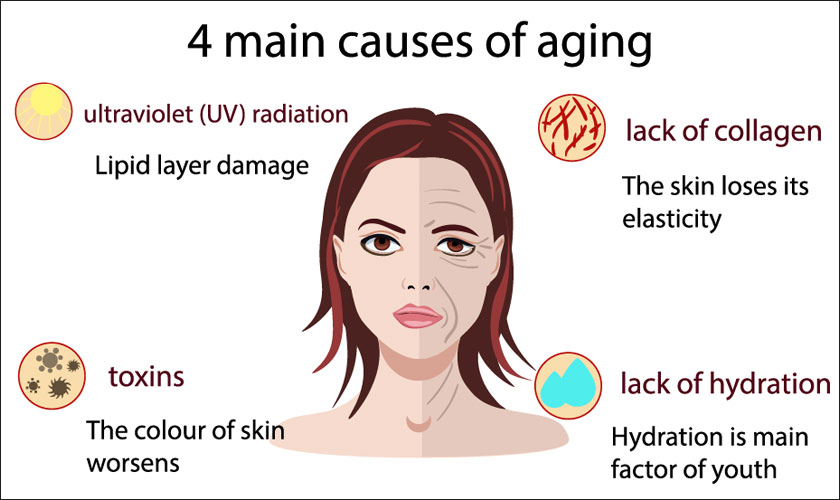 The 4 Main Causes of Aging