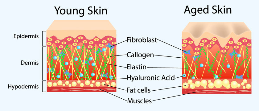 Improve Skin Hydration and Elasticity (anti-aging)