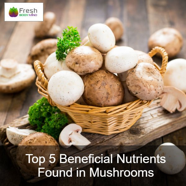 Top 5 Beneficial Nutrients Found in Mushrooms