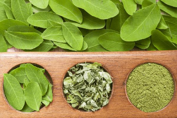 Best Organic Moringa Leaf Powder Capsule Miracle Tree Supplement