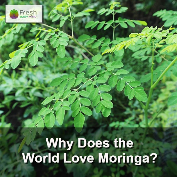 Why Does the World Love Moringa