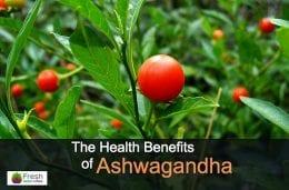 Ashwagandha herb growing like tomatoes