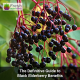 The Definitive Guide to Black Elderberry Benefits