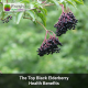The Top Black Elderberry Health Benefits