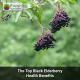 The Top Black Elderberry Health Benefits