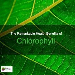 Chlorophyll Leaf
