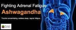 Adrenal gland and internal organ x-ray