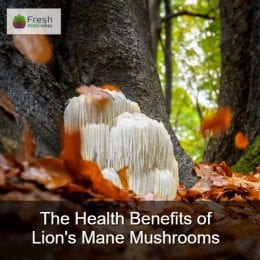 Health Benefits of Lion's Mane Mushrooms