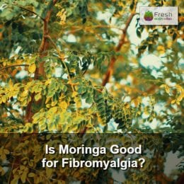 Is Moringa Good for Fibromyalgia?