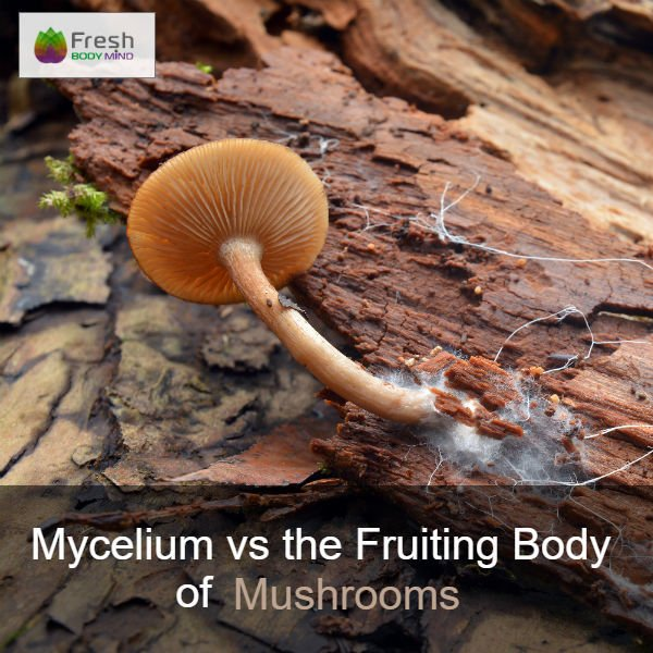 Mycelium vs the Fruiting Body of Mushrooms