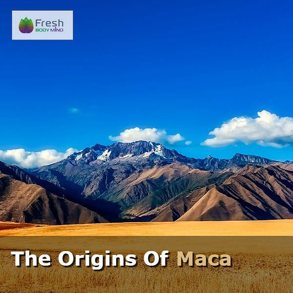 The Origins of Maca