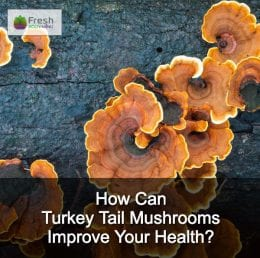 How Can Turkey Tail Mushrooms Improve Your Health?